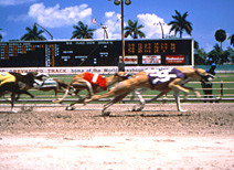 Greyhound Races in Fort Lauderdale