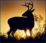 Ir de caza en Ciudad Victoria - Atracciones en Ciudad Victoria
