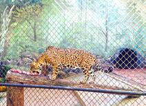 Zoológico Bosque Guaraní