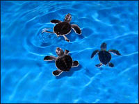 Granja de Tortugas en Isla Mujeres
