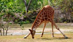 Zoológico Metropolitano de Miami