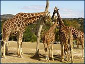 Africam Safari en Puebla