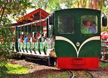 Tren Ecológico La Selva