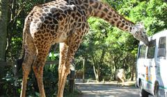 Zoológico y Safari