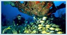 Reefs in Riviera Maya
