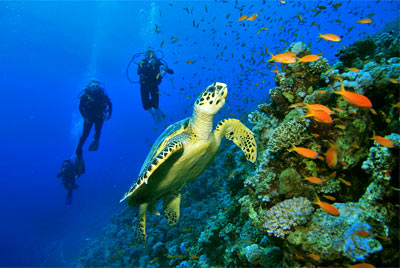 Best Places to Snorkel and Dive in Cozumel