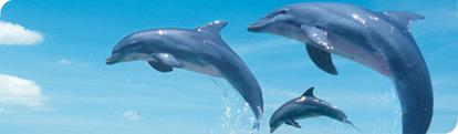 Swim with Dolphins, Mexican Caribbean