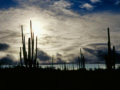Baja California Sur Desierto Baja California Sur