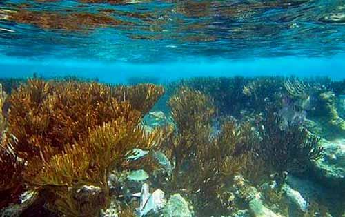 Akumal Mexico Snorkeling