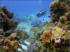 Cozumel Certified Scuba Diving Tour