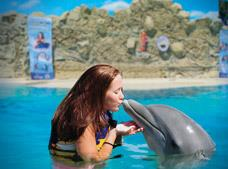 Dolphin Encounter at Six Flags Tour