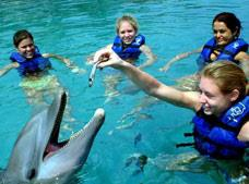 Dolphin Swim Xel-Ha with Entrance Tour