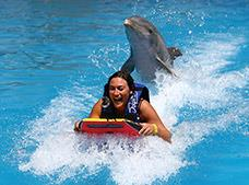 Tour Dolphin Swim Adventure| Dolphin Discovery