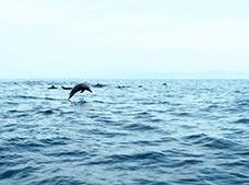 Dawn Tour with Stars and Dolphins in Huatulco