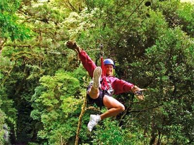 Canopy Adventure Tour in San Jose & Canopy Adventure Tour in San Jose San Jose San Jose Tours