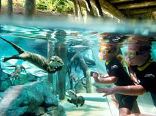 Tour Discovery Cove