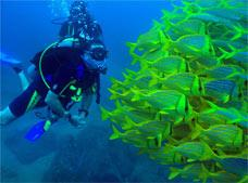 Scuba Diving in the Sea of Cortez Tour