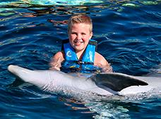 Dolphin Encounter Tour at Cozumel Dolphin Discovery, KID FREE!