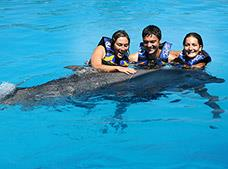 Tour Dolphin Encounter Puerto Vallarta, Dolphin Discovery