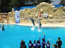 Dolphin Swim at Six Flags Tour