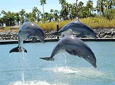Dolphin Encounter Los Cabos| Dolphin Discovery