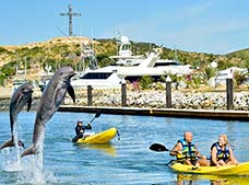 Dolphin Royal Swim Los Cabos, Dolphin Discovery