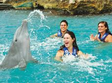 Dolphin Encounter in Punta Cana.
