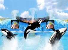 SeaWorld San Antonio Texas
