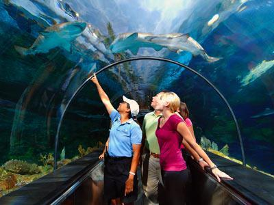 Tour Sea World - Busch Gardens y Aquatica