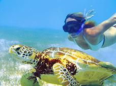 Sea Turtle Snorkel Tour