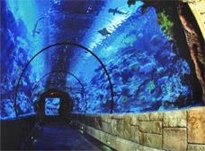 Tour Shark Reef Aquarium