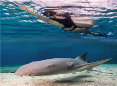 Swim with Rays at Stingray Beach Tour