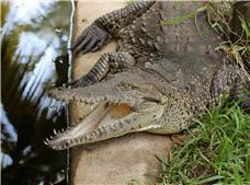 Turtles and Crocodiles Adventure Tour ¡PROMOTION 2X1!