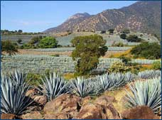 Private Tour to the Land of Tequila