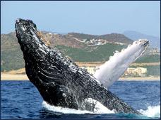 Whale Watching Tour with Transportation